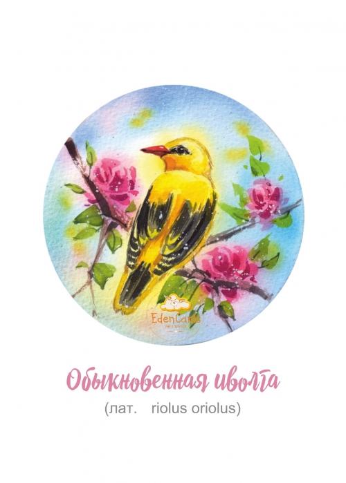 "Набор ""Птицы"""